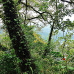 Explore Sacred Lake Jungle with Local