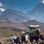 Kanchenjunga Trek, Himalaya