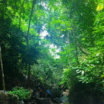 Hiking in the Evergreen forest of Phuket