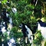 Kilimanjaro day hike and waterfalls tour at Marangu route