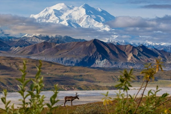 Denali in the #MountainAlphabet project