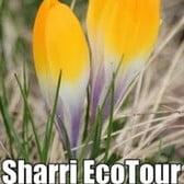 Sharri EcoTour