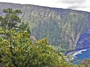 Image of Muliwai Trail