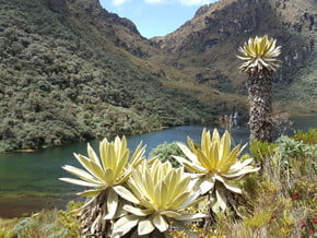 Image of Paramo de Las Hermosas, Andes