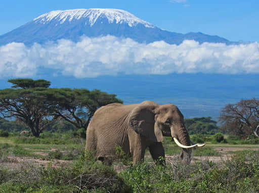 Kilimanjaro 5891m, ascensión por la ruta Machame